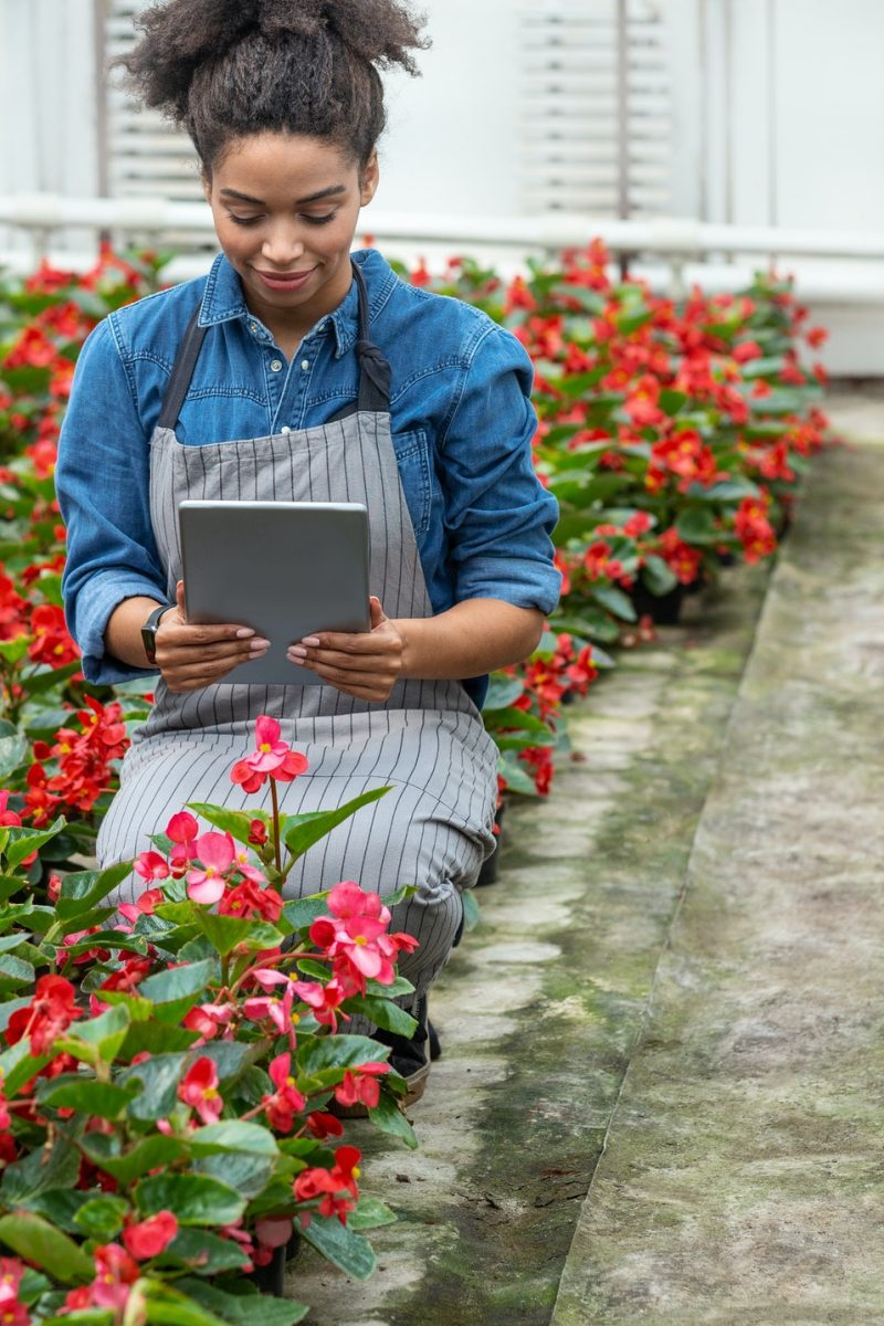 Photo of flowering plants in greenhouse. African american girl uses tablet on flower plantation