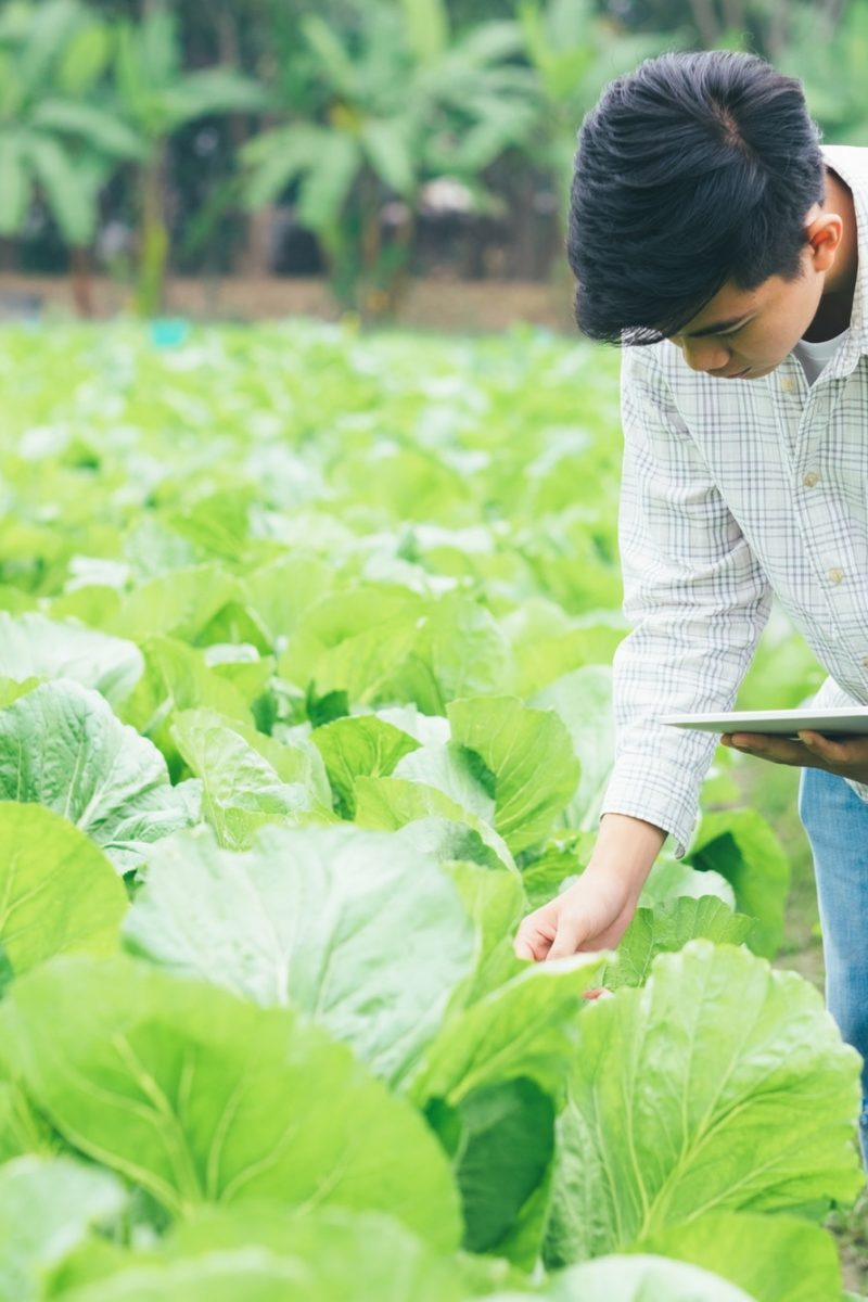 Smart farming using modern technologies in agriculture
